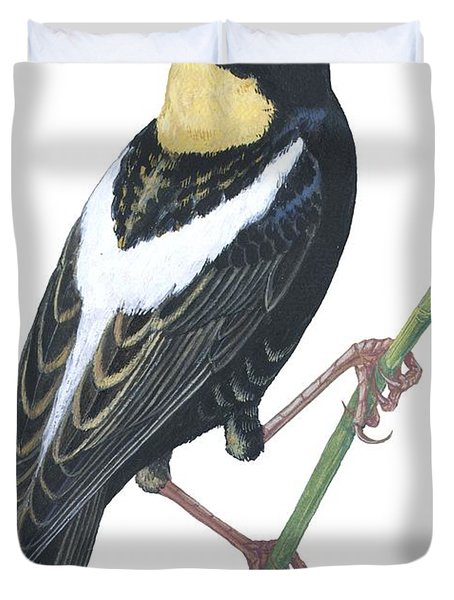 Bobolink Duvet Cover by Anonymous