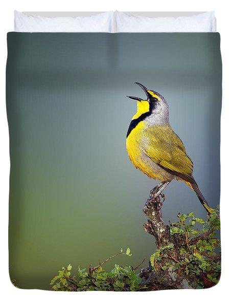 Bokmakierie Bird - Telophorus Zeylonus Duvet Cover