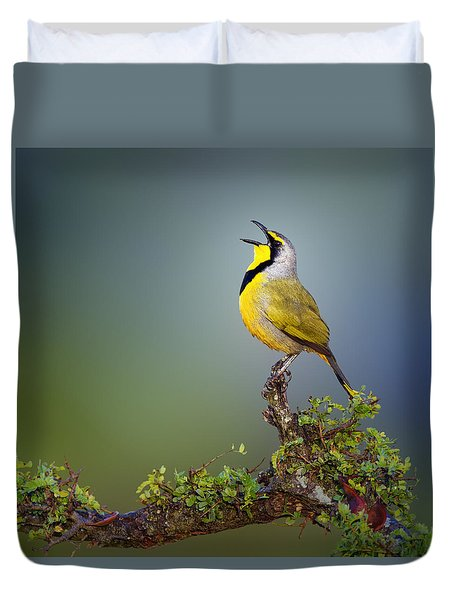 Bokmakierie Bird - Telophorus Zeylonus Duvet Cover by Johan Swanepoel
