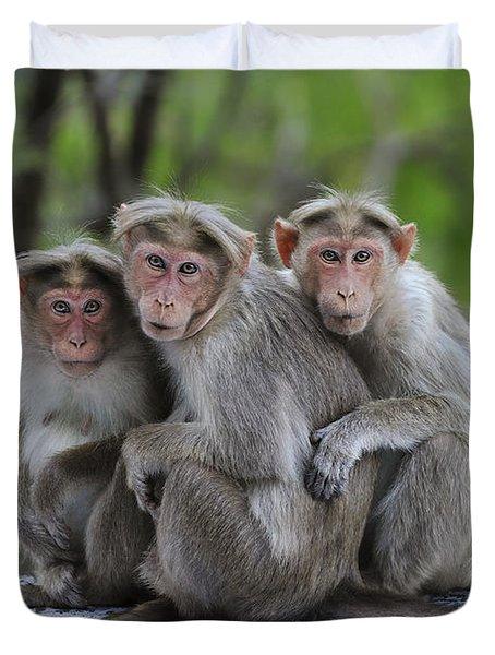 Bonnet Macaque Trio Huddling India Duvet Cover