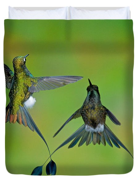 Booted Racket-tail Hummingbird Males Duvet Cover by Anthony Mercieca