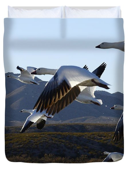Bosque Del Apache Snow Geese In Flight Duvet Cover by Bob Christopher
