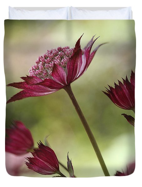 Botanica Duvet Cover by Connie Handscomb
