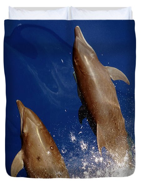 Bottlenose Dolphins Tursiops Truncatus Duvet Cover by Anonymous