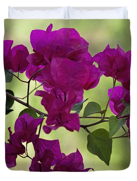 Bougainvillea Duvet Cover