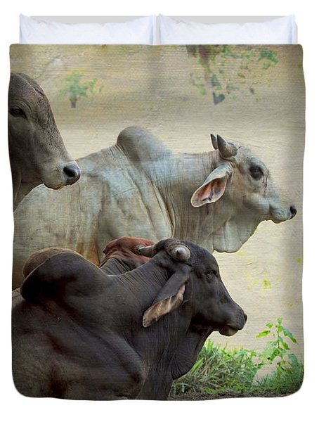 Brahman Cattle Duvet Cover