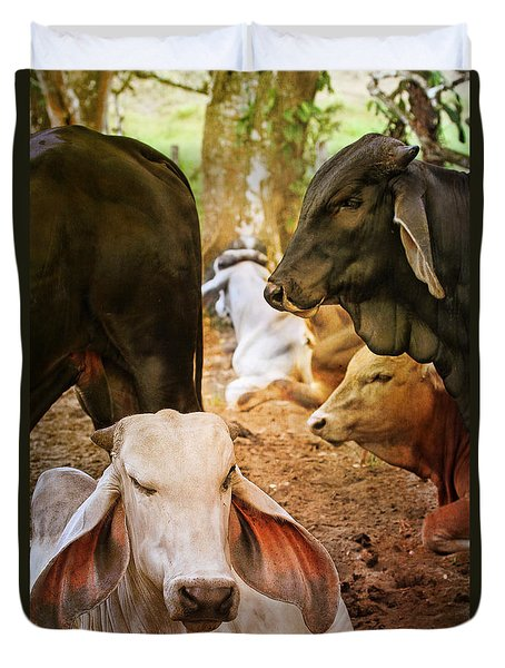 Brahman Cattle Vertical Duvet Cover