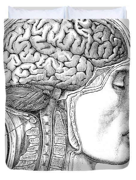 Brain From Right Side, 1883 Duvet Cover