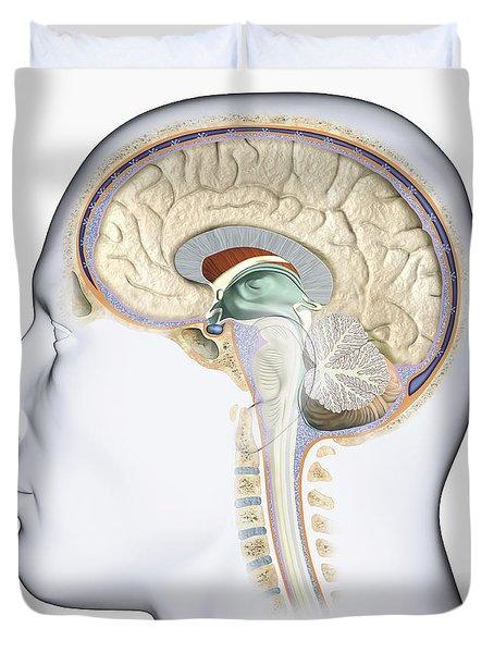 Brain In Cross Section Duvet Cover