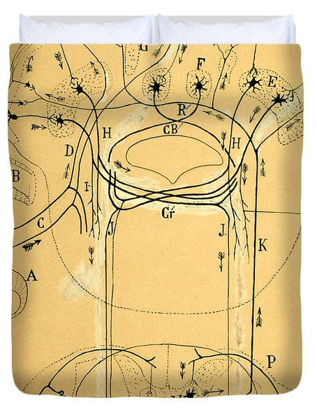 Brain Vestibular Sensor Connections By Cajal 1899 Duvet Cover by Science Source