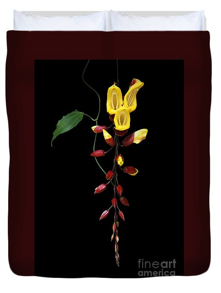 Brick And Butter Vine Duvet Cover by Judy Whitton