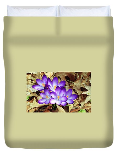 Spring Purple Crocus  Duvet Cover