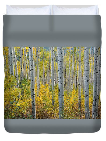 Brilliant Colors Of The Autumn Aspen Forest Duvet Cover