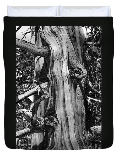 Duvet Cover featuring the photograph Bristle-cone Pine-2 by Mae Wertz
