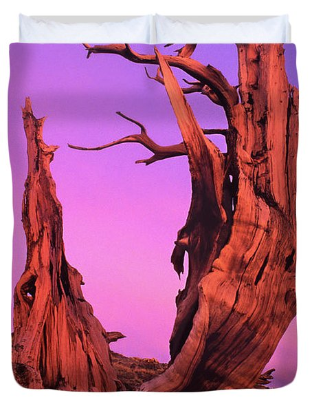 Duvet Cover featuring the photograph Bristlecone Pine At Sunset White Mountains Californa by Dave Welling