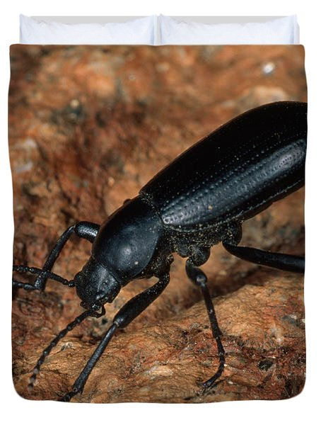 Broad-necked Darkling Beetle Duvet Cover