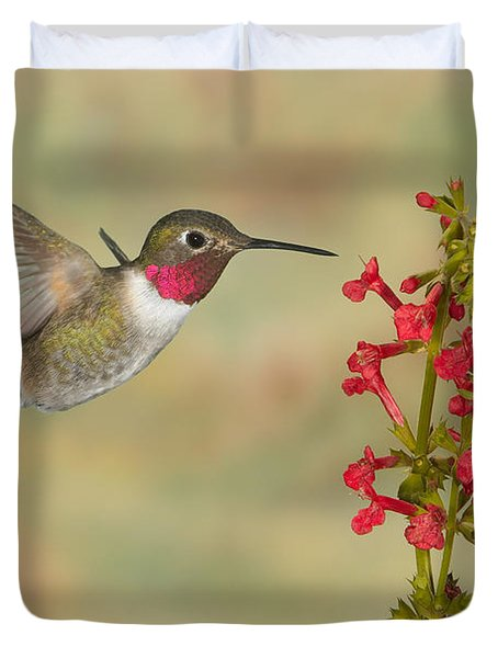 Broad-tailed Hummingbird 5 Duvet Cover