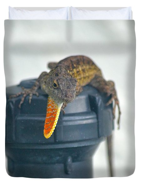 Brown Anole With Dewlap Duvet Cover by Richard Bryce and Family