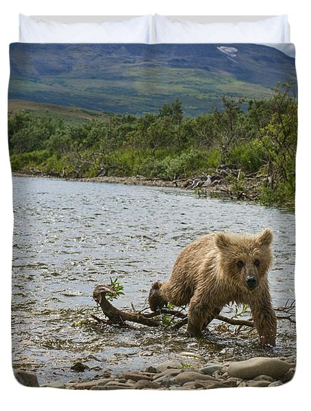Brown Bear Cub Walking Up Stream Trying Keep Up With Mom Duvet Cover by Dan Friend