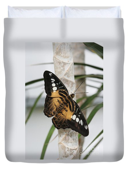 Brown Clipper Butterfly #2 Duvet Cover