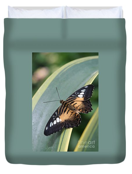 Brown Clipper Butterfly #4 Duvet Cover