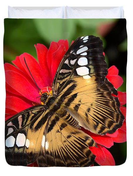 Brown Clipper Butterfly On Red Zinnia Duvet Cover by Eva Kaufman