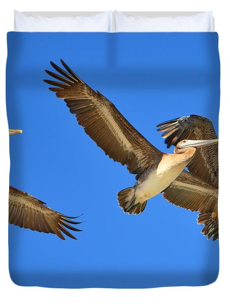 Brown Pelicans In Flight Duvet Cover by Debra Martz