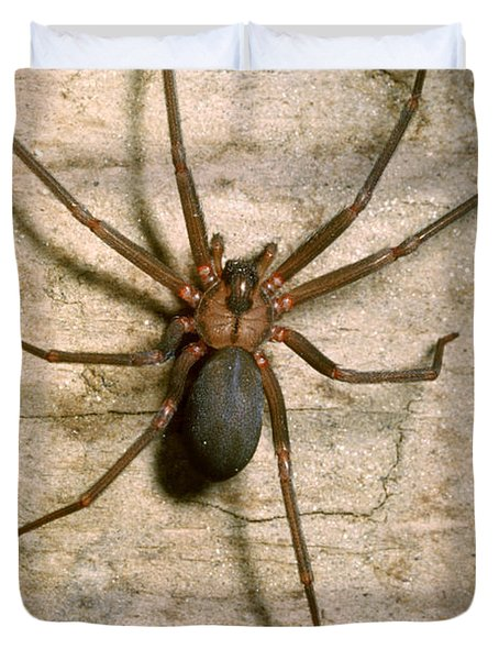 Brown Recluse Spider Duvet Cover