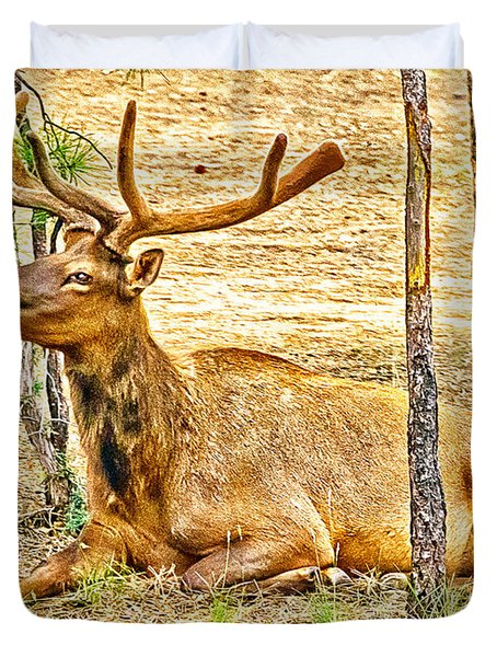Browsing Elk In The Grand Canyon Duvet Cover by Bob and Nadine Johnston