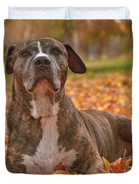 Bruno In The Fall Leaves  Duvet Cover