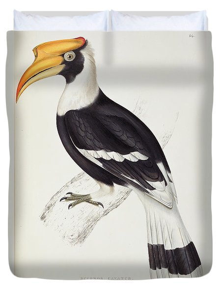 Great Hornbill Duvet Cover by John Gould