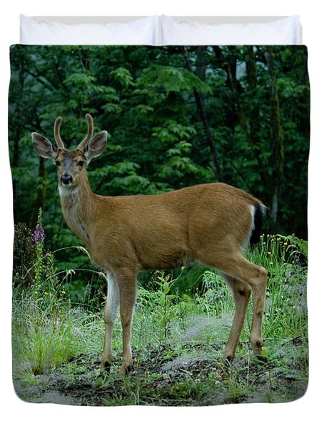 Duvet Cover featuring the photograph Buck by Rod Wiens