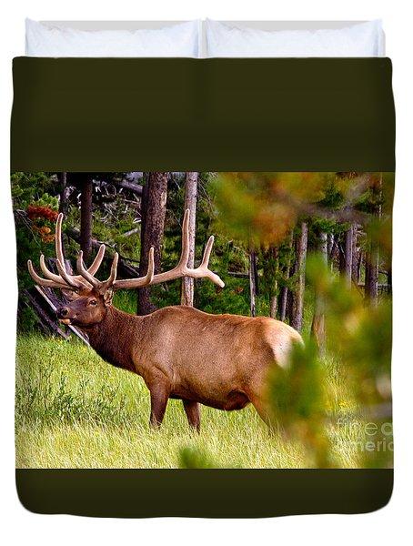 Bull Elk Duvet Cover by Bill Gallagher