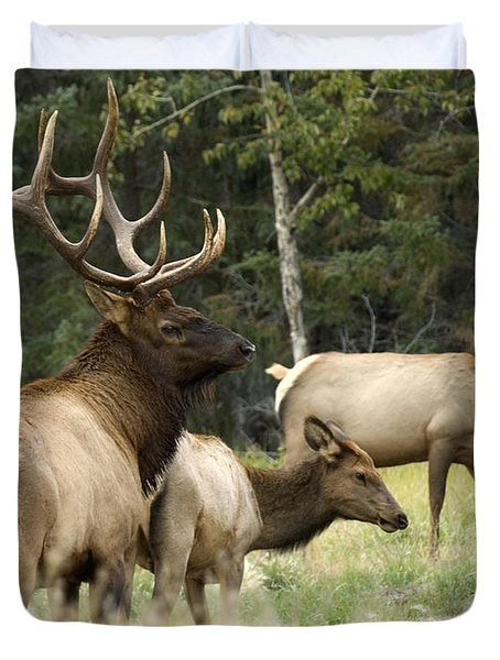 Bull Elk With His Harem Duvet Cover