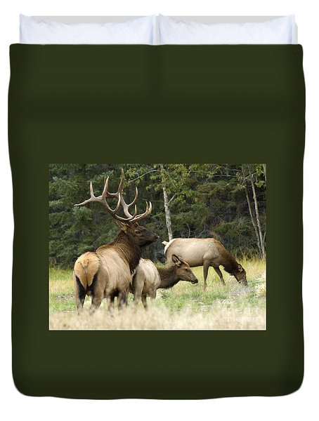 Bull Elk With His Harem Duvet Cover