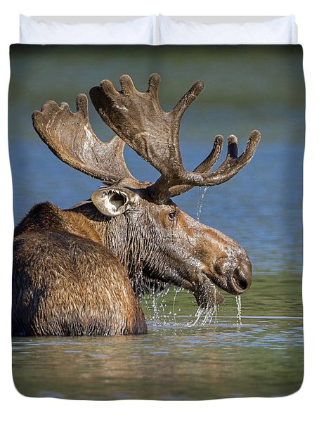 Duvet Cover featuring the photograph Bull Moose At Fishercap by Jack Bell