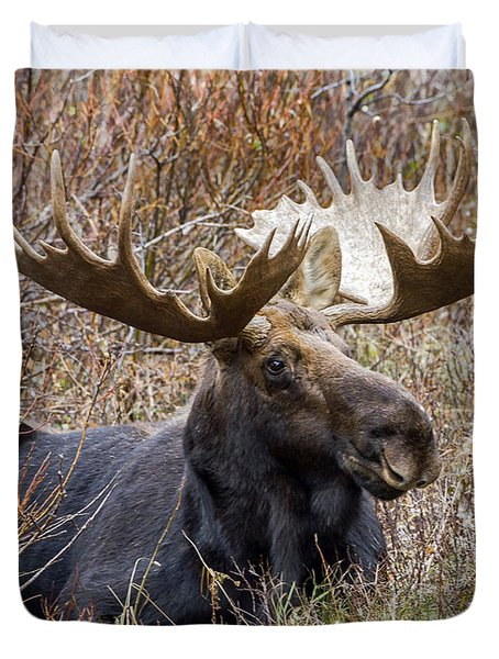 Bull Moose In Autumn Duvet Cover by Jack Bell