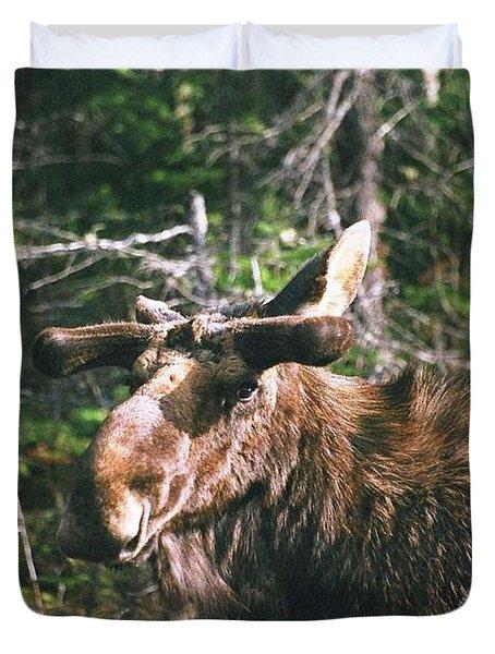 Bull Moose In Spring Duvet Cover