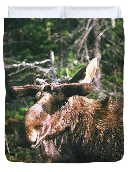 Bull Moose In Spring Duvet Cover by David Porteus