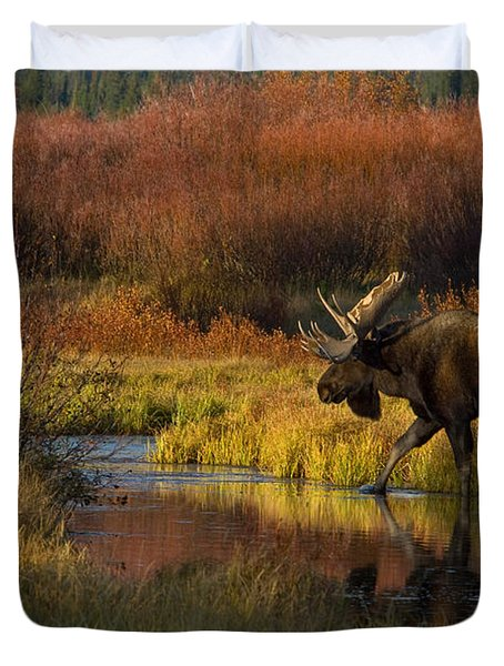 Bull Moose Duvet Cover by Thomas and Pat Leeson