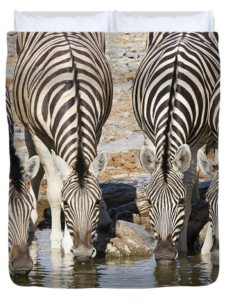 Burchells Zebras Drinking Etosha Np Duvet Cover