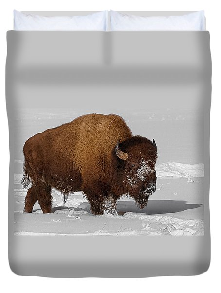 Burly Bison Duvet Cover by Priscilla Burgers