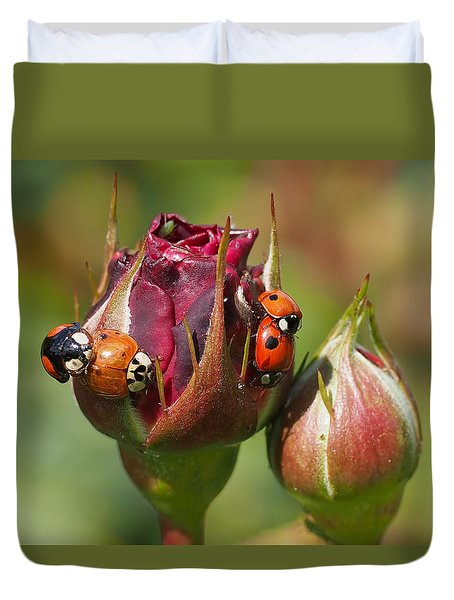 Busy Ladybugs Duvet Cover
