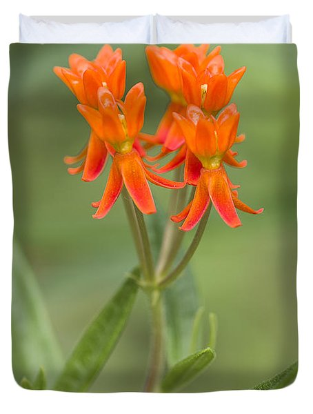 Butterfly Weed Photograph By Steven Ralser