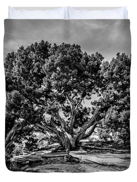 Bw Limber Pine Duvet Cover
