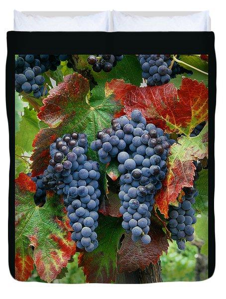 5b6374-cabernet Sauvignon Grapes At Harvest Duvet Cover
