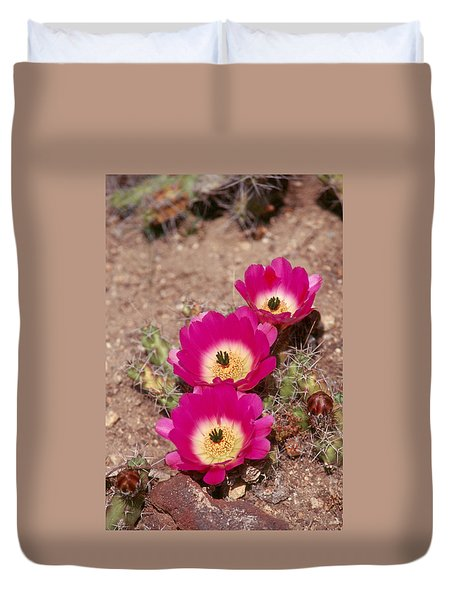 Cactus 1 Duvet Cover by Andy Shomock
