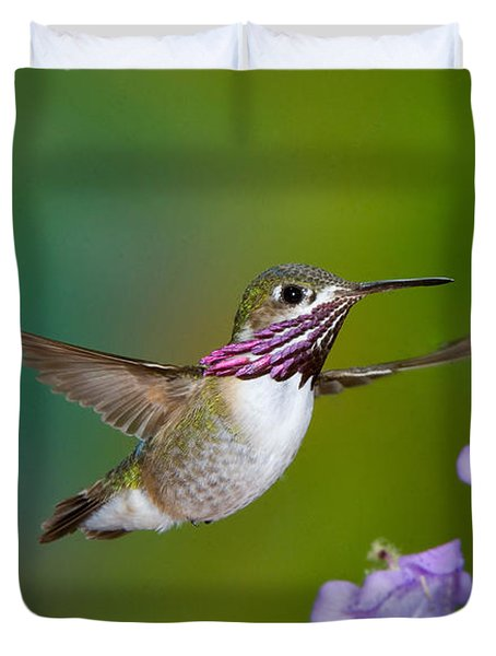Calliope Hummingbird Duvet Cover by Anthony Mercieca