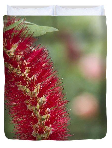 Callistemon Citrinus - Crimson Bottlebrush Duvet Cover by Sharon Mau