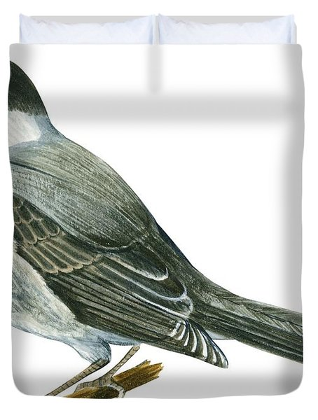 Canada Jay Duvet Cover by Anonymous
